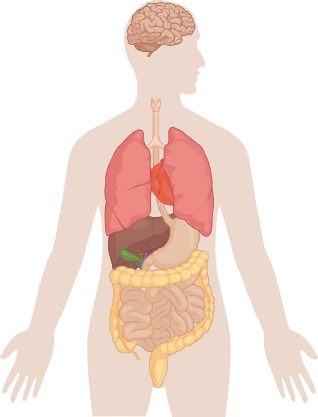 Miért fontos a testünk méregtelenítése? Az emberi test méregtelenítése