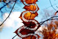 Nap képe - Mintázott őszi falevelek