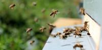 Senki sem találja meg a méhet az ábrán – 140-es IQ alatt mindenkinek beletörik a bicskája