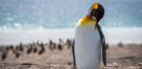 Zavarba ejtő méretek: megtalálták minden idők leghatalmasabb pingvinjét