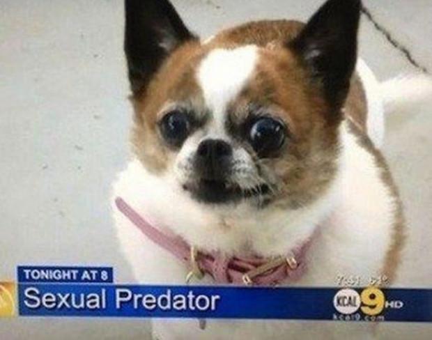"""""""Szexuális ragadozó"""""""