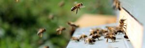 Senki sem találja meg a méhet az ábrán - 140-es IQ alatt mindenkinek beletörik a bicskája