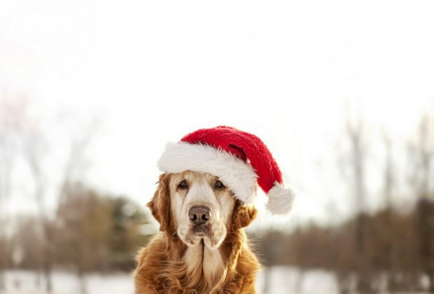 Kutyus karácsonyi hangulatban
