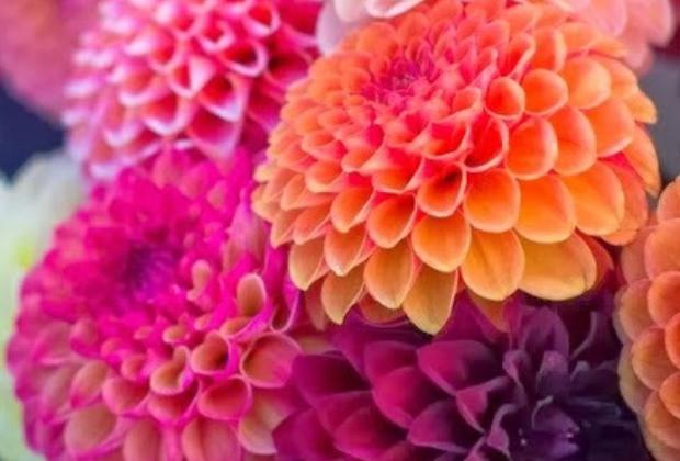 Színes őszi virágok