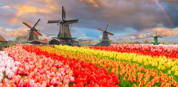 Ma ennél szebbet már úgysem látsz: Kivirágzott egész Hollandia