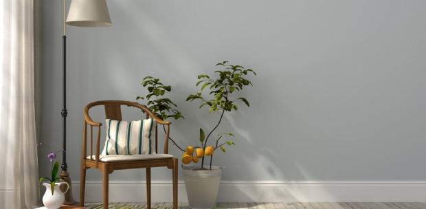 Vigyél színt a lakásodba: Gyönyörű szobanövények, amik feldobják az otthonod
