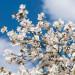 Idén későn jön a tavasz