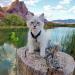 Világjáró macskák