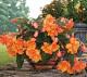 6. Dísznövények őszi ültetése  Ősszel sem kell üresen hagynunk az ültetőládákat, sok olyan dísznövényt találunk, amelyek kifejezetten jól tűrik a hideget. Válogassunk kedvünkre a kertészetek őszi kínálatából, ahol megtaláljuk többek között a mutatós, fürtökben nyíló virágaikkal díszítő erikát és csarabot, az ezüstös színű, elegáns párnacserjét, a lila színben pompázó díszkáposztát, vagy a vidám, színes virágaival díszítő krizantémot, melynek számtalan fajtája beszerezhető.
