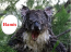 A vizes koalák mérgesek - de azért ennyire nem!