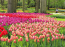 A virágok szerelmeseinek tavasszal Hollandia maga a földi paradicsom.