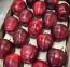 Napi egy alma az orvost távol tartja, ráadásul a koleszterint is csökkenti.