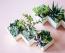 Örök igazság, hogy a szobanövények élettel telivé varázsolják a lakást, azonban érdemes olyat választani, ami strapabíró és ráadásul még dekoratív is. A kaktusz tökéletesen megfelel minden feltételnek, akárkisebb vagy nagyobb verziót választasz.