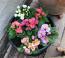 KANKALIN - A növény már januártól nyílik a lakásokban, ezért ha tavaszt csalogatnánk, ezzel megtehetjük. A félárnyékot szereti, valamint ha mindig nedves a földje, így akár 3 hónapig folyamatosan virágozhat. Fontos, hogy hajtásai mérgezőek.