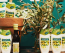 Palmolive Naturals Ultra Moisturization tusfürdő olíva és aloe vera kivonattal (449 forint)