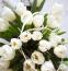 TULIPÁN -Nyár közepéig is pompázhat. Csak akkor bolygassuk, ha már nagyon tömötten vannak a virágok egymás mellett, különben sérülhetnek a hagymák. A napos helyet szereti, nyílás után pedig vissza kell vágni, hogy energiát raktározhasson télre.