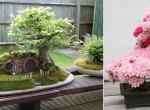 A világ 25 leggyönyörűbb bonsai fája - Az egyik már 800 éves!