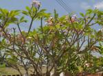 """Kerti """"lakók"""", trópusi élővilág - Blogbejegyzés"""