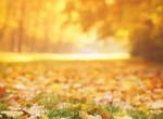 Nagy novemberi horoszkóp
