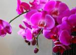 Orchidea kisokos - Így ápold egyszerűen
