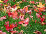 Fontos kerti teendők októberre