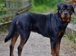 Ezek a leghűségesebb kutyafajták