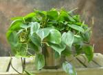 Az 5 legkitartóbb szobanövény