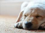 Milyen pózban alszik a kutyád? Titkos tulajdonságaira derülhet fény