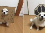 Így öltöztesd be a kutyádat halloweenre, ha jót akarsz nevetni