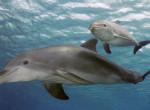 Nézd meg ezt a videót: a szemed láttára születik meg a kisdelfin