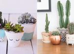 7 egyszerű és kreatív módszer a kaktuszok tárolására