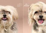 Fotók: így néznek ki a kutyák stílusfodrász előtt és után