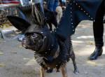 A Halloween a kutyákat sem kíméli - Nézd meg, hogy megijedt ez az eb a dekorációtól