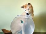 Elképesztő! Partra vetődött halakat próbál életben tartani ez a kutya? - Videó