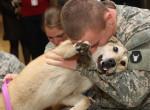 Videó: így örülnek a kutyák a seregből hazatért gazdiknak - Potyogni fognak a könnyeid