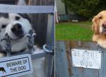 """Ők lennének a vérebek?! 6 cuki eset, amikor a """"Harapós kutya"""" tábla értelmét vesztette"""