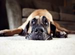 Ez a kutya mindig elmosolyodik, amikor fotózzák - Zabálnivaló!