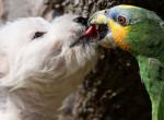 Furcsa barátság: cuki kutyát etet a papagáj - Fotók