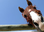 Egy ló is tud úgy pancsolni, mint egy gyerek? Imádni való ez a videó!