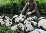 Ha megnézed ezt a videót, azonnal akarsz egy pandát - Hihetetlen, milyen cukik