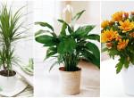A 3 leghatékonyabb levegőtisztító növény a NASA tudósai szerint – Megéri a lakásban tartani őket