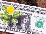Mágnesként vonzzák a pénzt: Növények, amik gazdagságot hoznak