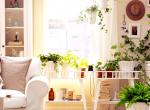 Az 5 legszebb virágzó szobanövény, ami színt visz a lakásodba