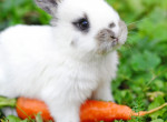 Ezért ajándékozz élő állat helyett csokinyuszit húsvétra!