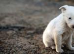 Közel 100.000 sorsára hagyott vagy elkóborolt állat járja az utcákat