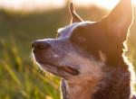 Az orvos tanácsai: így előzd meg, hogy a kutyád hőgutát kapjon