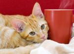 Egy szuper hely, ahol cicák között kávézhatsz a macskák világnapján