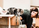 Pop-up macskakávézó nyílik Budapesten - Tri cica elmondja, miért gyere el