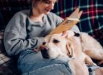 COVID-19: Karanténban a háziállat lehet a legjobb pszichológus