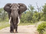 Meghalt egy elefánt, mert petárdával töltött gyümölcsöt evett